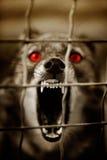 Abdeckunghund Lizenzfreie Stockfotografie