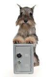 Abdeckunghund mit metallischem Safe Stockfoto