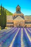 Abdij van Senanque bloeiende lavendelbloemen Gordes, Luberon, PR Stock Foto's