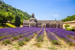 Abdij van Senanque en de bloeiende bloemen van de rijenlavendel Gordes, Luberon, Vaucluse, de Provence, Frankrijk stock foto's