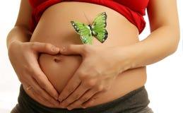 Abdomen de una mujer embarazada Fotografía de archivo libre de regalías