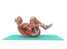 Abdominal. The human body with the abdominal muscles Stock Photos
