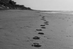 Abdrücke auf dem Morgensand des Strandes Stockfoto