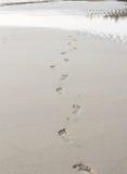 Abdrücke auf dem Sand Stockbild