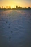 Abdrücke auf einem Schnee Stockbild