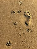 Abdrücke auf einem Strand lizenzfreie stockfotografie
