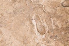 Abdrücke auf gefrorenem Boden Lizenzfreie Stockfotos