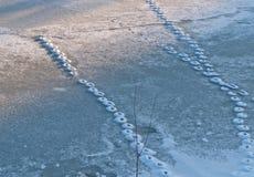 Abdrücke der Katze auf schneebedecktem Eis Stockfoto