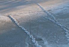 Abdrücke der Katze auf schneebedecktem Eis Stockbilder