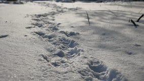 Abdrücke der menschlichen Natur im Schneewinter gestalten Weglos Schnee landschaftlich Lizenzfreies Stockfoto