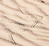Abdrücke in der Sandeidechse Stockfoto
