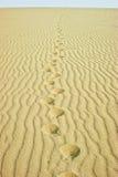 Abdrücke in der Wüste Stockfoto