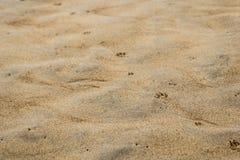 Abdrücke des Hundes auf dem Sand Stockfoto