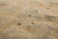 Abdrücke des Hundes auf dem Sand Lizenzfreie Stockfotos