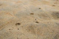 Abdrücke des Hundes auf dem Sand Stockbild