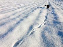 Abdrücke in einem Schnee und in einer schwarzen Katze im Abstand Lizenzfreie Stockfotografie