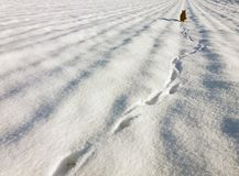 Abdrücke in einem Schnee und in einer schwarzen Katze im Abstand Stockbilder