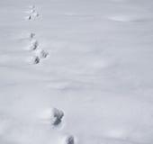 Abdrücke in einem Schneezusammensetzungshintergrund Lizenzfreies Stockfoto