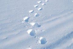 Abdrücke im frischen Schnee Lizenzfreie Stockbilder