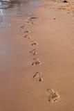 Abdrücke im Sand Lizenzfreies Stockfoto