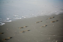 Abdrücke im Sand auf Strand Lizenzfreies Stockbild