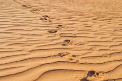Abdrücke im Sand in der roten Wüste bei Sonnenaufgang Stockbilder