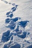 Abdrücke im Schnee Lizenzfreie Stockfotos