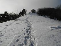 Abdrücke im Schnee lizenzfreies stockbild
