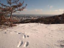 Abdrücke im Schnee Stockfoto