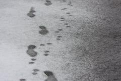Abdrücke im Schnee Mann- und Hundespur Lizenzfreies Stockfoto