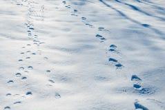 Abdrücke im Winterschnee Stockbilder