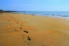 Abdrücke und pawprints auf dem Strand stockbild