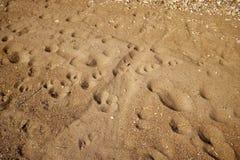 Abdrücke und Pfotenabdrücke im Strandsand lizenzfreies stockfoto