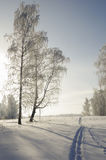 Abdrücke von den Skis im Winterwald an einem eisigen sonnigen Tag Stockbilder