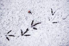 Abdrücke von Vögeln im Schnee Stockfotos