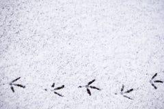 Abdrücke von Vögeln im Schnee Stockfotografie