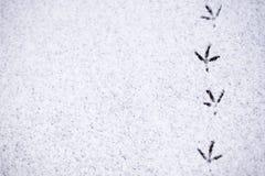 Abdrücke von Vögeln im Schnee Stockbilder