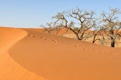 Abdruck auf Düne, Namibia Lizenzfreie Stockbilder