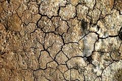Abdruck auf trockenem Land Stockbild