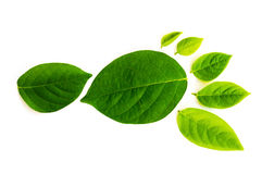 Abdruck gemacht von den grünen Blättern Stockfotografie