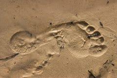 Abdruck im Sand Stockbilder