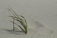 Abdruck im Sand durch das Seegras Lizenzfreies Stockbild