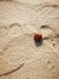 Abdruck im Sand mit roter Marienkäfernahaufnahme Lizenzfreies Stockfoto