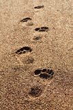 Abdruck im Sand Seestrand, Ferienidee Stockfoto