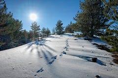 Abdruck im Schnee von Etna Park, Sizilien stockfotografie