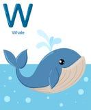 Abecadło dla dzieci Śliczny zoo abecadło z kreskówek zwierzętami odizolowywającymi na białym W wielorybie Fotografia Stock