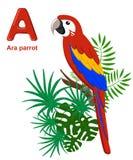 Abecadło dla dzieci Śliczny zoo abecadło z kreskówek zwierzętami odizolowywającymi na bielu A aronach papuzich Obraz Royalty Free