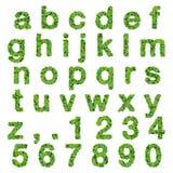 Abecadło z liczbami robić od zieleń liści odizolowywających na białym tle 3 d czynią Zdjęcie Stock