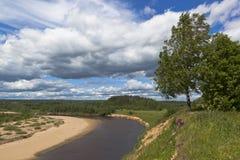 Abedul al borde de la costa escarpada del río Imagen de archivo