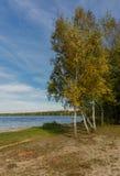 Abedul amarillo en los bancos del lago Imágenes de archivo libres de regalías